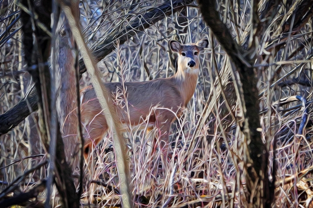 Deer1F-1200