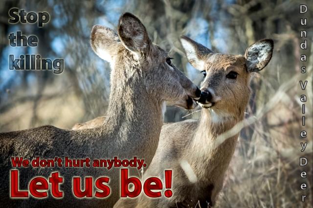 deer-150